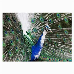 Animal Photography Peacock Bird Large Glasses Cloth (2 Side)