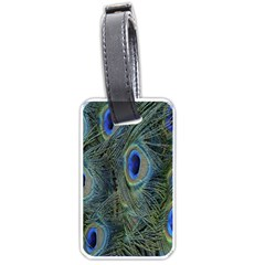 Peacock Feathers Blue Bird Nature Luggage Tags (one Side)  by Amaryn4rt