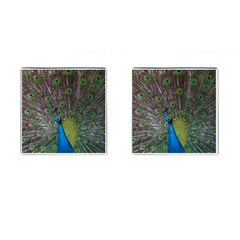 Peacock Feather Beat Rad Blue Cufflinks (square)