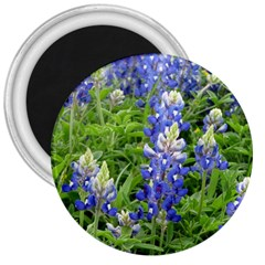 Blue Bonnets 3  Magnets by CreatedByMeVictoriaB