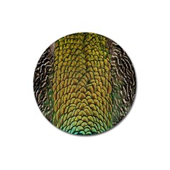 Colorful Iridescent Feather Bird Color Peacock Magnet 3  (round)