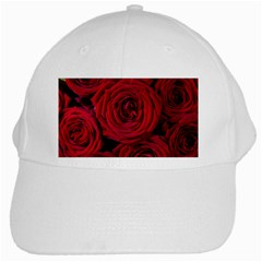 Roses Flowers Red Forest Bloom White Cap