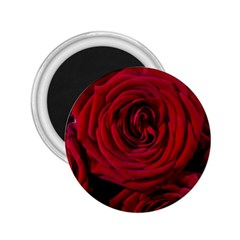 Roses Flowers Red Forest Bloom 2.25  Magnets