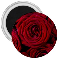 Roses Flowers Red Forest Bloom 3  Magnets