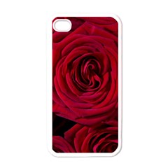 Roses Flowers Red Forest Bloom Apple iPhone 4 Case (White)