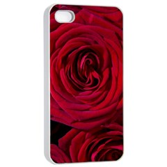 Roses Flowers Red Forest Bloom Apple iPhone 4/4s Seamless Case (White)