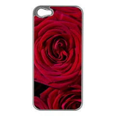 Roses Flowers Red Forest Bloom Apple iPhone 5 Case (Silver)
