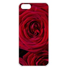 Roses Flowers Red Forest Bloom Apple iPhone 5 Seamless Case (White)