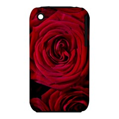 Roses Flowers Red Forest Bloom iPhone 3S/3GS