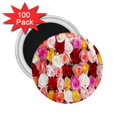 Rose Color Beautiful Flowers 2 25  Magnets (100 Pack)