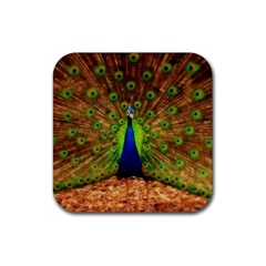 3d Peacock Bird Rubber Coaster (square)  by Amaryn4rt