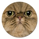 Cute Persian Cat face In Closeup Magnet 5  (Round) Front