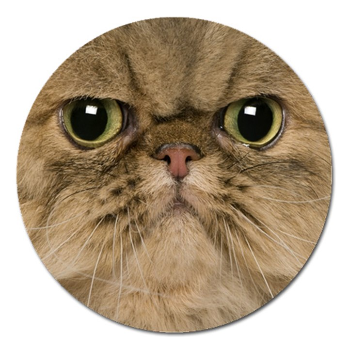 Cute Persian Cat face In Closeup Magnet 5  (Round)
