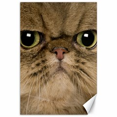 Cute Persian Cat Face In Closeup Canvas 12  X 18   by Amaryn4rt