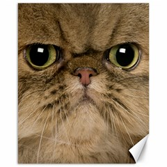 Cute Persian Cat Face In Closeup Canvas 16  X 20   by Amaryn4rt