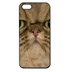 Cute Persian Cat Face In Closeup Apple Iphone 5 Seamless Case (black) by Amaryn4rt
