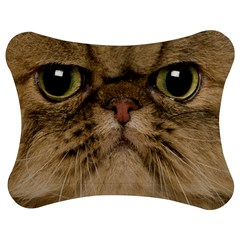 Cute Persian Cat Face In Closeup Jigsaw Puzzle Photo Stand (bow) by Amaryn4rt