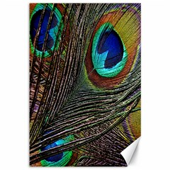 Peacock Feathers Canvas 12  X 18