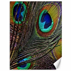 Peacock Feathers Canvas 36  X 48