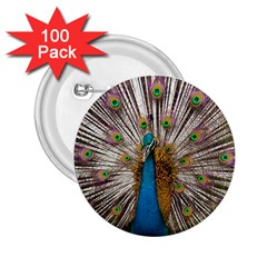 Indian Peacock Plumage 2 25  Buttons (100 Pack)  by Simbadda