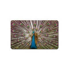Indian Peacock Plumage Magnet (name Card) by Simbadda