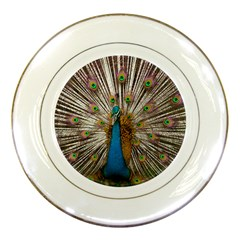 Indian Peacock Plumage Porcelain Plates by Simbadda