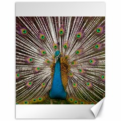 Indian Peacock Plumage Canvas 18  X 24   by Simbadda