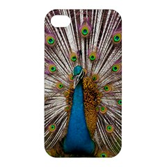 Indian Peacock Plumage Apple Iphone 4/4s Premium Hardshell Case by Simbadda