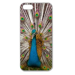 Indian Peacock Plumage Apple Seamless Iphone 5 Case (clear)