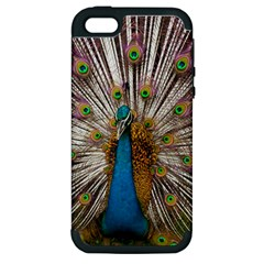 Indian Peacock Plumage Apple Iphone 5 Hardshell Case (pc+silicone) by Simbadda
