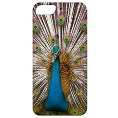 Indian Peacock Plumage Apple Iphone 5 Classic Hardshell Case by Simbadda