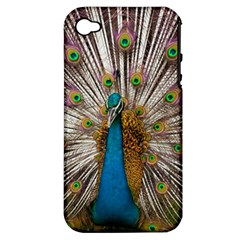 Indian Peacock Plumage Apple Iphone 4/4s Hardshell Case (pc+silicone) by Simbadda