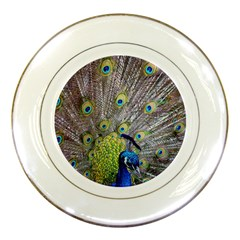 Peacock Bird Feathers Porcelain Plates