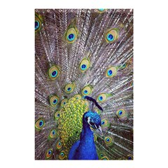 Peacock Bird Feathers Shower Curtain 48  X 72  (small)  by Simbadda