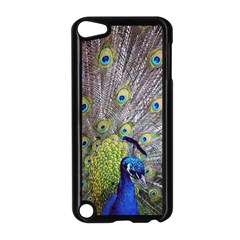 Peacock Bird Feathers Apple Ipod Touch 5 Case (black) by Simbadda