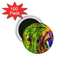 Peacock Feathers 1 75  Magnets (100 Pack)  by Simbadda
