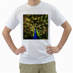 Peacock Bird Men s T Shirt (white) (two Sided) by Simbadda
