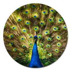 Peacock Bird Magnet 5  (round) by Simbadda