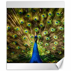 Peacock Bird Canvas 8  X 10  by Simbadda