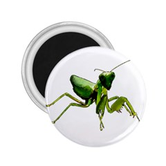 Mantis 2 25  Magnets by Valentinaart
