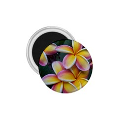 Premier Mix Flower 1 75  Magnets by alohaA
