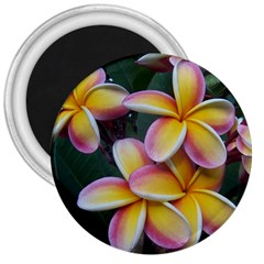 Premier Mix Flower 3  Magnets by alohaA