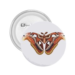 Butterfly Animal Insect Isolated 2 25  Buttons by Simbadda