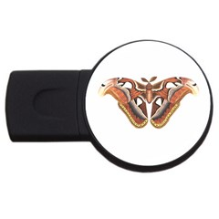 Butterfly Animal Insect Isolated Usb Flash Drive Round (2 Gb) by Simbadda