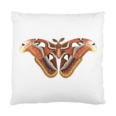Butterfly Animal Insect Isolated Standard Cushion Case (one Side) by Simbadda