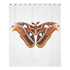 Butterfly Animal Insect Isolated Shower Curtain 60  X 72  (medium)  by Simbadda