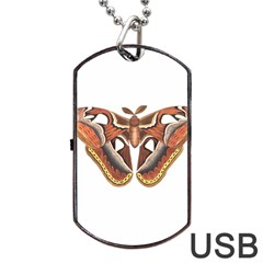 Butterfly Animal Insect Isolated Dog Tag Usb Flash (one Side) by Simbadda