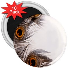 Peacock Feathery Background 3  Magnets (10 Pack)