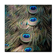 Colorful Peacock Feathers Background Tile Coasters