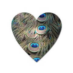 Colorful Peacock Feathers Background Heart Magnet by Simbadda